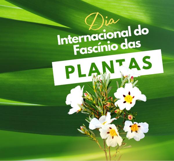 Polinizadores: os fiéis mensageiros das plantas